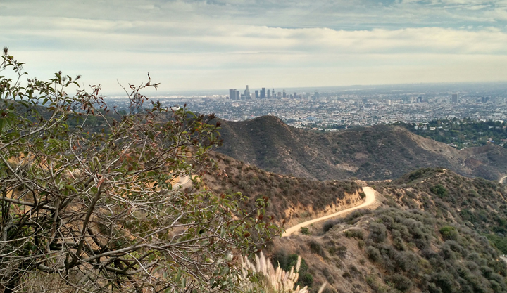 Hollyridge Trail - Looking down into Los Angeles